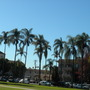 HAPPY NEW YEAR FROM SUNNY, WARM SAN DIEGO  : > ) (Syagrus romanzoffiana - Queen Palms)