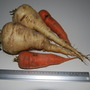 Parsnips & Carrots