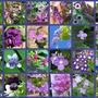 Purples_2_1