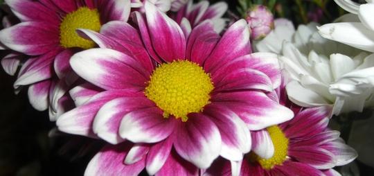 Cut_flowers_020110.jpg