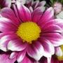 Cut_flowers_020110