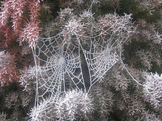 Frosty webs