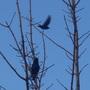 Birds_sun_3rd_jan_10_001