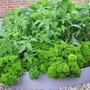 Big easy Enviro raised bed- made from recycled plastic for veg