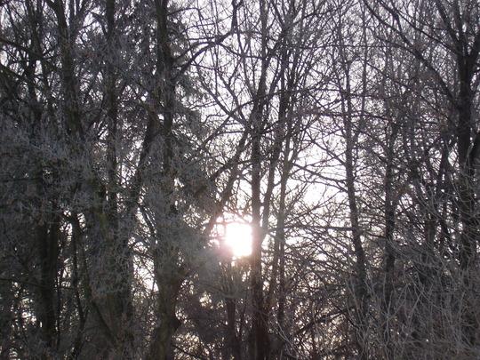 Winter Sunshine Through The Trees