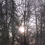 Winter Sunshine Through The Trees