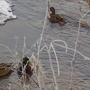 Brave birds!!