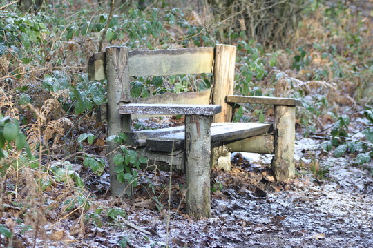 Bench in woods - for Jacque