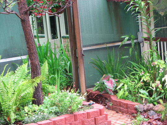 Mid-summer downunder: more of the new garden beds now starting to fill out.