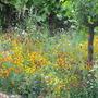 Fetzer_Garden_2008_chelsea.jpg
