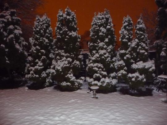 Jan_Snow_2010_005.jpg