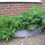 our seconed raised bed in the front garden