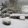 Winter_robin_001