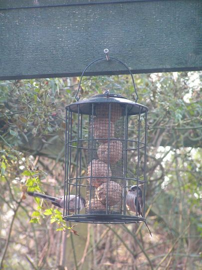 The Long tailed tits came back yesterday