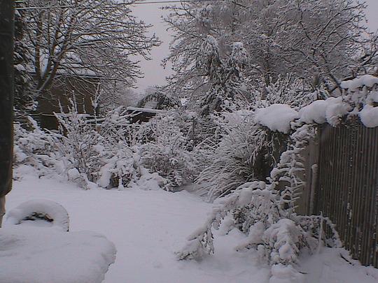 back_garden.jpg