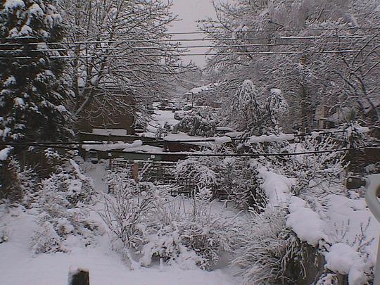 back_garden_2.jpg