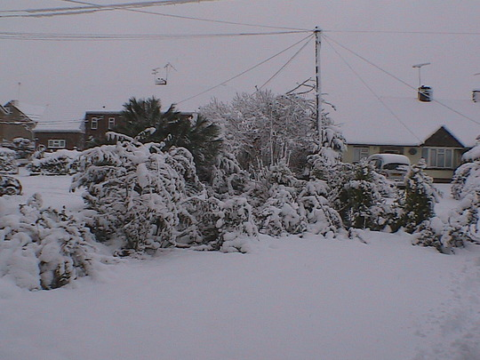 front_garden.jpg