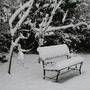 Christmas_snow_jan_10_075