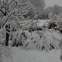 Christmas_snow_jan_10_066