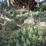 Quail_botanical_gardens_01_05_2010_127