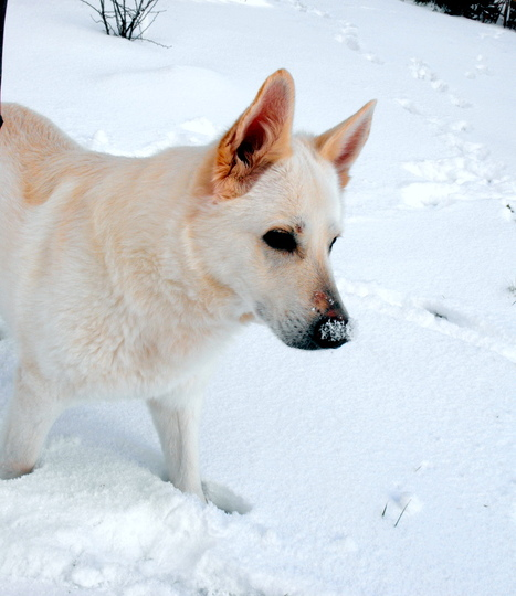 "My Summer Enjoying The Snow ""Blog"""