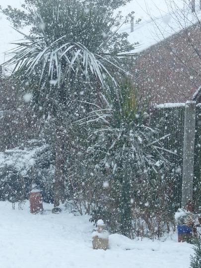 Snow had fallen snow on snow.................. (Cordyline australis (New Zealand cabbage palm))
