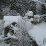 Snowy gardens!