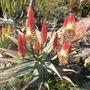 Quail_botanical_gardens_01_05_2010_072