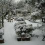 Snow_garden_2010_009