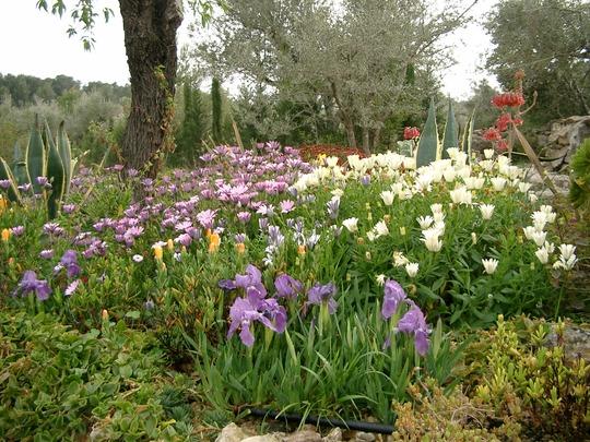 Spanish garden 2003