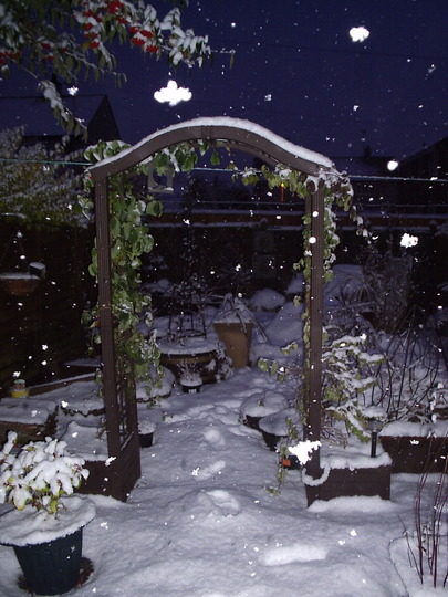 "Our ""Chocolate Garden"" at dusk, 9 January, 2010"