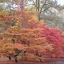 Westonbirt arboretum 1