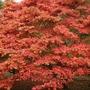 Westonbirt arboretum 3