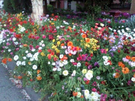 An overview of the 2009 Spring blooms