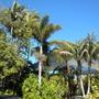 Rancho_santa_fee_nurseries_plants_01_14_2010_011