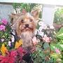 Brandi_in_flowers