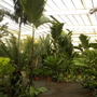 Rancho_santa_fee_nurseries_plants_01_14_2010_012