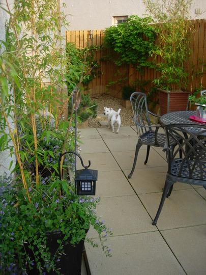 Molly_on_the_patio.jpg