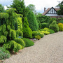 Conifer hedge update