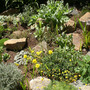 The new rockery