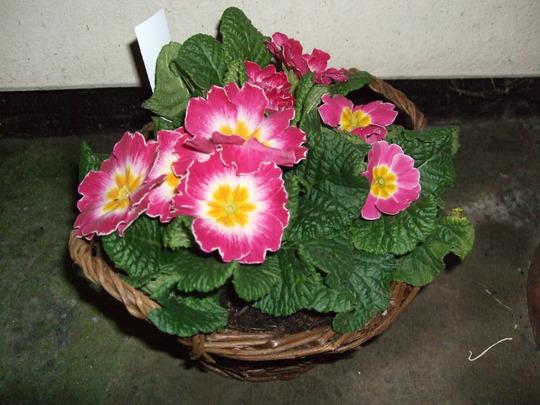 Freeby primrose basket