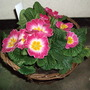 Freeby_primrose_basket