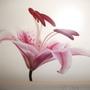 Floral_pics_009