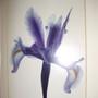 Floral_pics_011