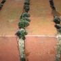 moss growing on garden wall