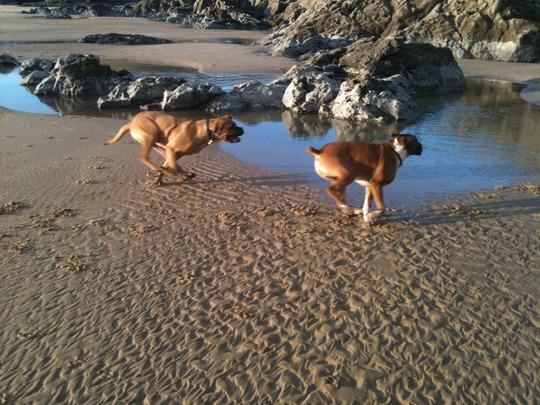 Harvey and Dexter racing!