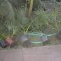 Balboa_park_01_28_2010_056
