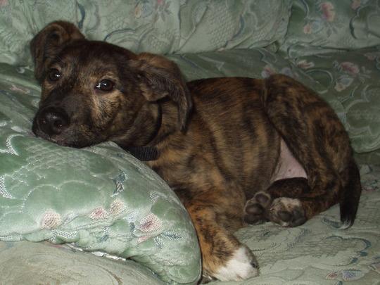 Murphy (15 weeks)