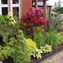 Mixed planting in front border