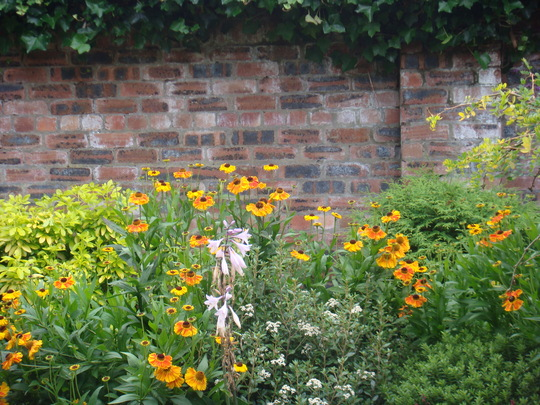 Mixed herbaceous planting